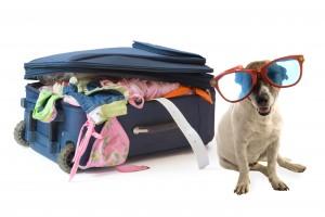 cane con occhiali da sole e valigia