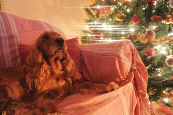 Chicca della nostra amica Samantha, un esempio di amore sotto l'albero!