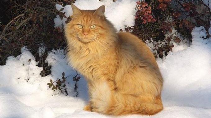 Il gatto Spiro, che ha percorso 80 km