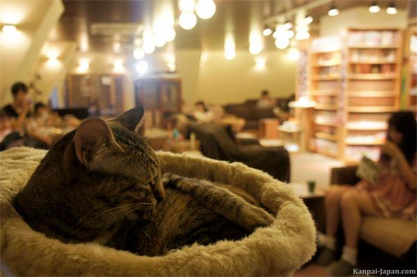 I Neko Cafè spopolano nelle grandi città asiatiche