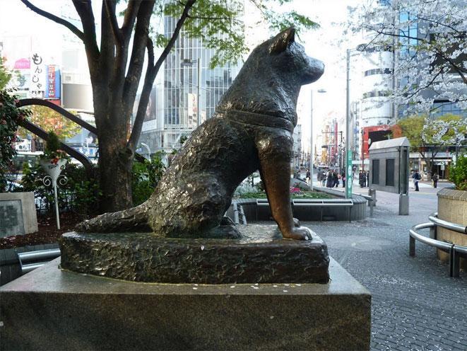 hachiko-tokyo