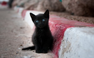 black-cats-awesomelycute.com-7