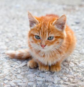 gatto_2