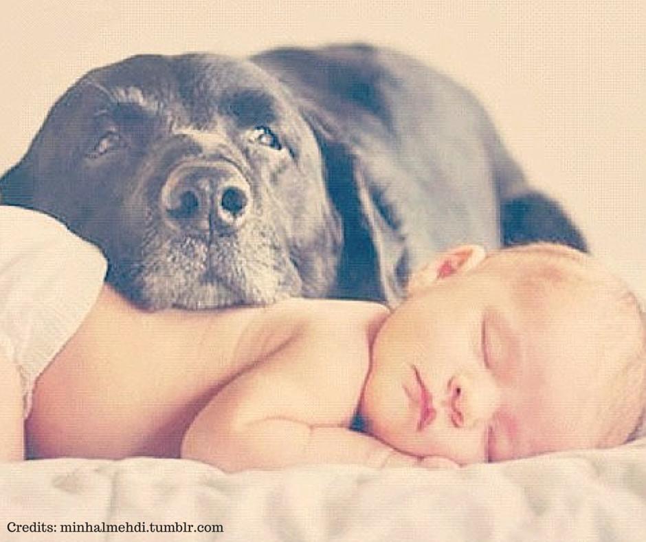 Giuntinipet Bebè In Arrivo Come Reagirà Il Cane