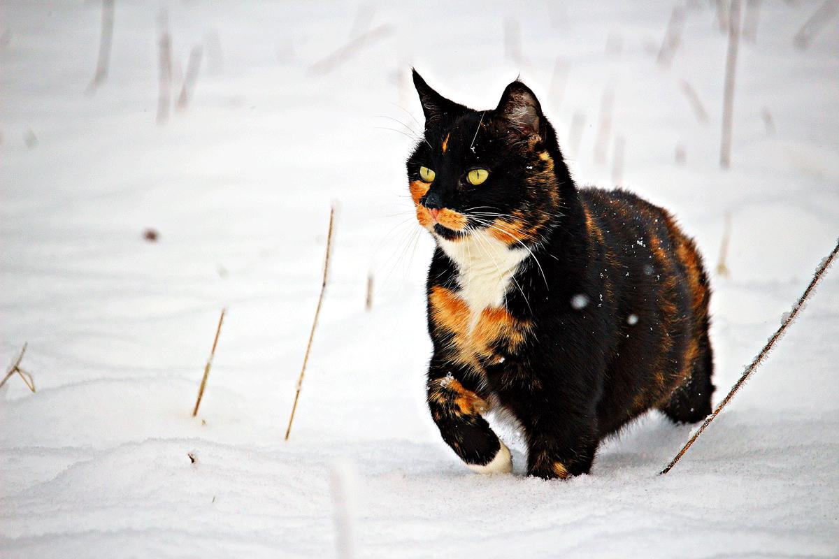 Giuntinipet come accudire i gatti in inverno giuntini pet for Il gatto inverno