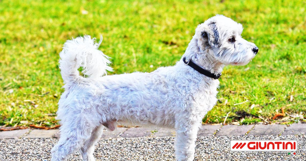 Giuntinipet perch i cani scodinzolano giuntinipet - Perche i cani scavano sul divano ...